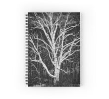 White Birch Tree In Black And White Spiral Notebook