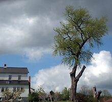 Lone Tree (Now!) by Billlee