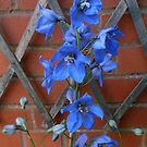 Delphinium Delight by kathrynsgallery