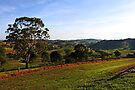 Bega, NSW by Evita