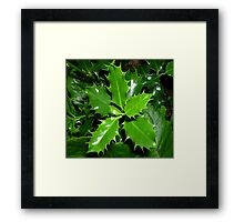 New Holly Framed Print