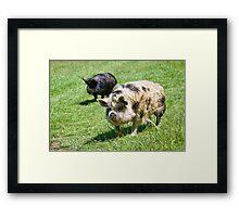 Ruffles And Truffles Framed Print