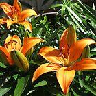 Orange Lilies at Sunset by BlueMoonRose
