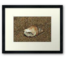 Shell home - inhabitant inside Framed Print