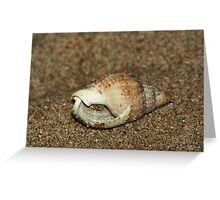 Shell home - inhabitant inside Greeting Card