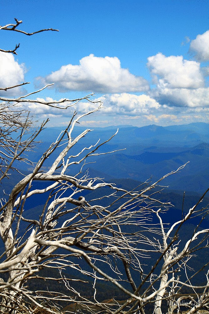 Silver Snowgum Vista by Natalie Ord