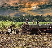 The Harvesters by catedral01