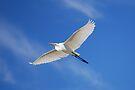 Wings in the blue by bazcelt