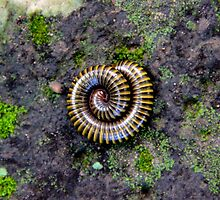 An Animated Spiral - Ankgor, Cambodia. by Tiffany Lenoir