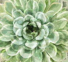 Green Succulent by TDSwhite