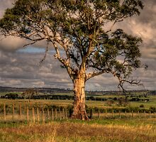Sturdy - Along the Hume HWY -The HDR Experience by Philip Johnson