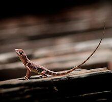 Ring-Tailed Dragon by May-Le Ng