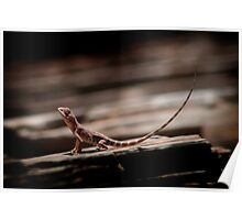 Ring-Tailed Dragon Poster