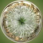 Dandelion Sphere by Don White