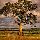 Strength - Somewhere Near Canberra , Australia - The HDR Experience by Philip Johnson
