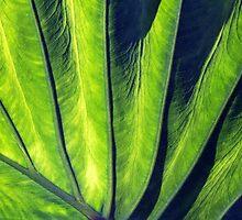 Tallonal Leaf  by Haydee  Yordan