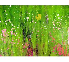 Pink Flowers in Meadow Photographic Print