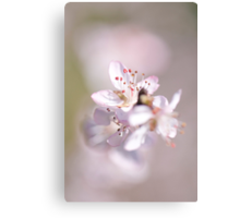 David peach Blossom  Canvas Print