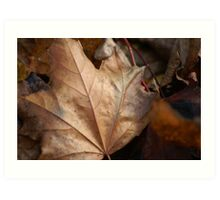 When Leaves Fall Art Print