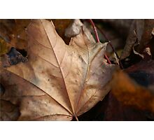 When Leaves Fall Photographic Print
