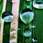 Dew Drops by Jamie Lee