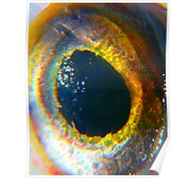 Here's Lookin' At Ya.....All In The Eye Poster