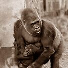 Gorilla protecting baby (sepia effect) by buttonpresser