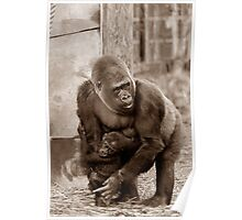Gorilla protecting baby (sepia effect) Poster