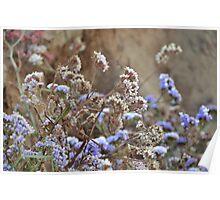 Flora CALIFORNIA Poster