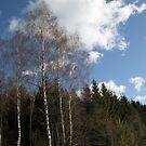 Winter Sunshine by Antanas