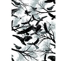 Blackbirds Photographic Print