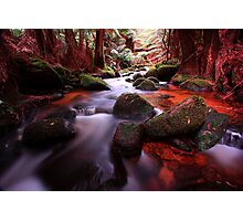 """Little Forester River-2"" Photographic Print"