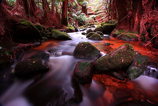 """""""Little Forester River-2"""" by Husky"""