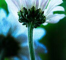 white mum textured by lensbaby
