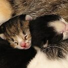 Tiny Snuggles by NatureGreeting Cards ©ccwri
