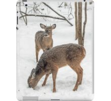 Young Spike Buck and Doe Whitetail Deer In Snowy Woods iPad Case/Skin