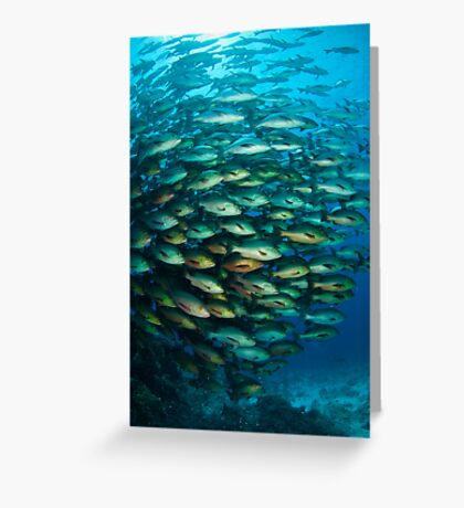 Schooling Snapper Greeting Card