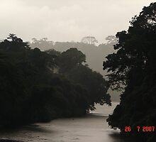 RIVER IN THE RAIN FORREST OF CAMEROON by NASEEM SULEMAN