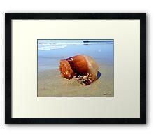 Jellyfish Crab Hitchhiker  Framed Print