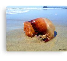 Jellyfish Crab Hitchhiker  Canvas Print