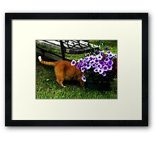 Curiosity And The Cat  Framed Print