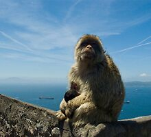 Momma Monkey with Baby in Gibraltar by bellafreck