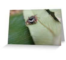 Jumping spider on leaf Greeting Card