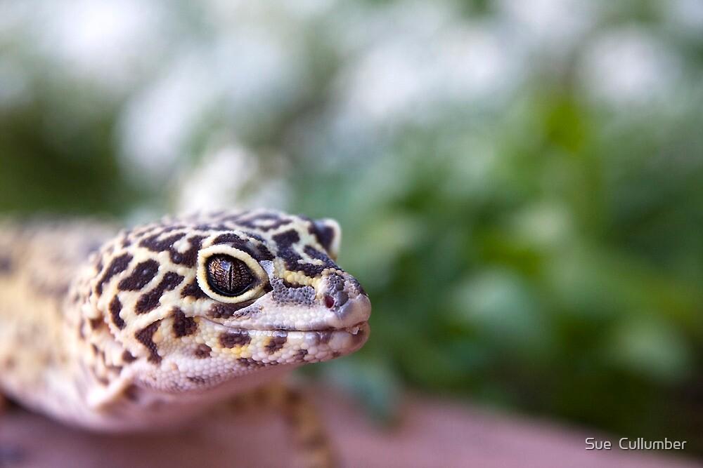 Leopard Gecko  by Sue  Cullumber