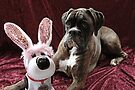 You Can't Fool Me... It's Not The Easter Bunny - Boxer Dogs Series by Evita