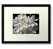 Candent Greeting Framed Print