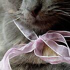 Blue Kitten with a Pink Ribbon by Tim Hilton