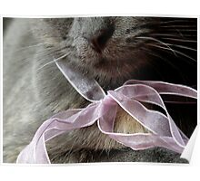 Blue Kitten with a Pink Ribbon Poster