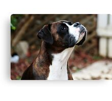Something In the Air -Boxer Dogs Series- Canvas Print