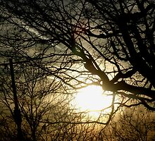 The brightness of the sun shines through the trees. by HardworkinJudy